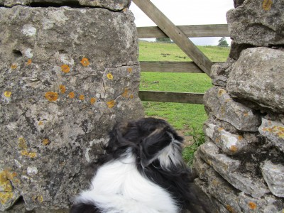Castle dog walk and dog-friendly pub, North Yorkshire - Driving with Dogs
