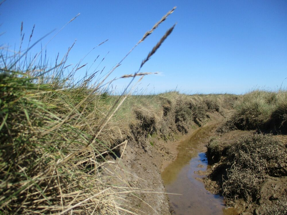 A149 A walk on the Marshes and a dog-friendly pub with B&B rooms near Wells, Norfolk - Walking the dog on the Norfolk saltmarshes