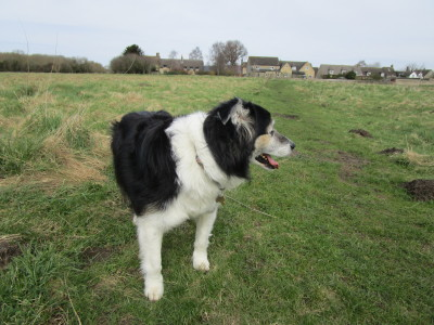 M40 Junction 9 dog-friendly pub and dog walk, Oxfordshire - Driving with Dogs