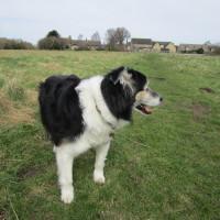 M40 Junction 9 dog-friendly pub and dog walk, Oxfordshire - Dog walks in Oxfordshire