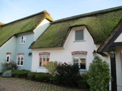 A31 dog-friendly pub near Winterbourne, Dorset - Driving with Dogs