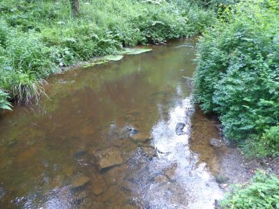 A170 Woodland dog walk with swimming pool, North Yorkshire - Driving with Dogs