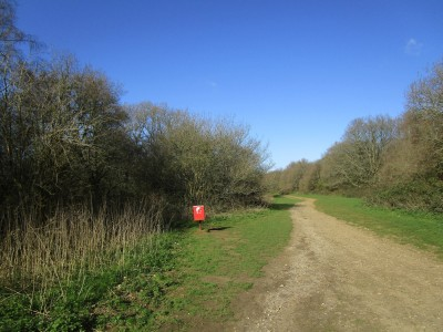 A25 Dog walk on the Downs near Guildford, Surrey - Driving with Dogs