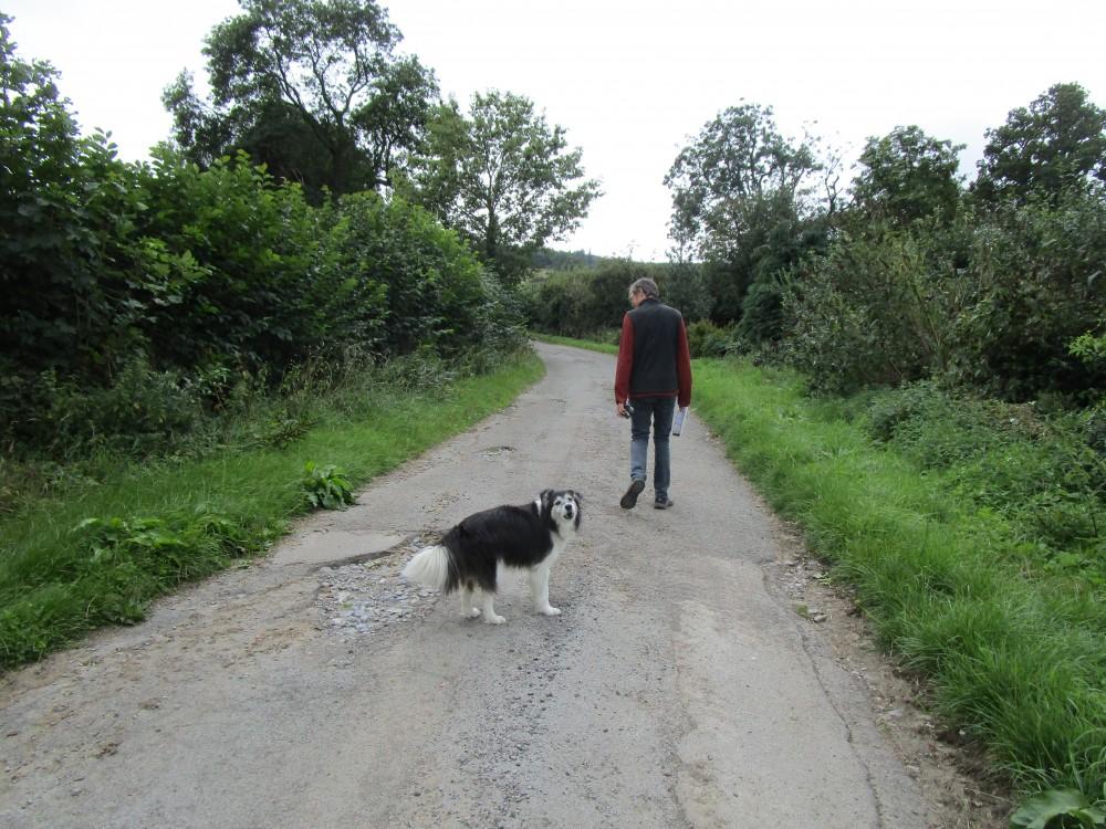 Dog-friendly pub and dog walk near Leyburn, North Yorkshire - Yorkshire dog-friendly pub and dog walk
