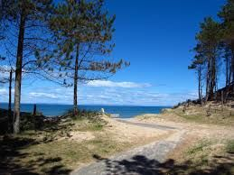 A96 Forest and beach dog walk, Scotland - Driving with Dogs