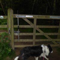 A170 remote woodland walk with the dog near Sawdon, North Yorkshire - Yorkshire dog walks
