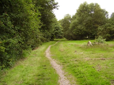 M6 Junction 15 woodland dog walk, Staffordshire - Driving with Dogs
