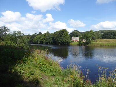 A69 Riverside dog walk and country park by Hexham, Northumberland - Driving with Dogs