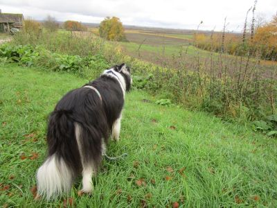 A420 dog-friendly pub and dog walk near Abingdon, Oxfordshire - Driving with Dogs