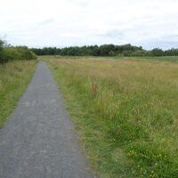 Nature Meadows dog walk near Houghton le Spring, Tyne & Wear - P1020710.JPG
