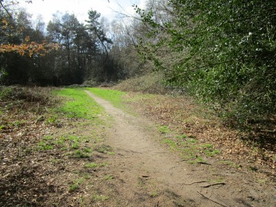 Woodland dog walk near Liss, West Sussex - Driving with Dogs