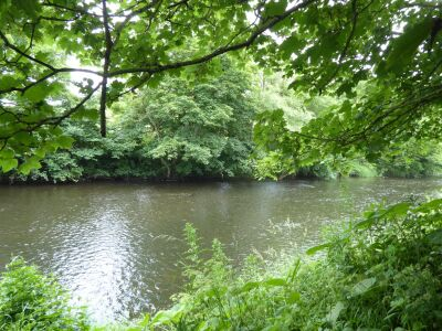 A690 Riverside dog walk near Spennymoor, County Durham - Driving with Dogs