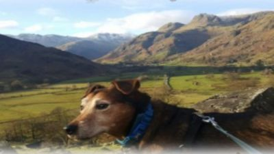 A6 dog-friendly pub and dog walk near Kendal, Cumbria - Driving with Dogs
