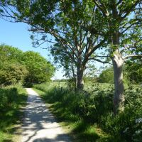 A walk on the Viking Way near Horncastle, Lincolnshire - Lincolnshire dog walks