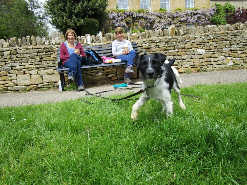 A44 dog-friendly pub and dog walk near Moreton-in-Marsh, Gloucestershire - Dog walks in Gloucestershire