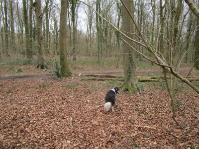 Eartham Woods dog walk near Chichester, West Sussex - Driving with Dogs