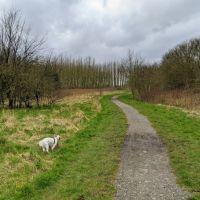 Local Dog Walk: Wheatacre Woods, Lancashire - IMG_20200307_142745.jpg