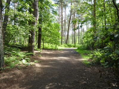 Woodland dog walk near Market Rasen, Lincolnshire - Driving with Dogs