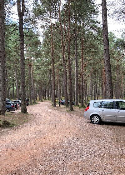 Roseisle country park with the dog, Scotland - BF9BC335-4251-487E-BD5F-3F888B3F19A6.jpeg