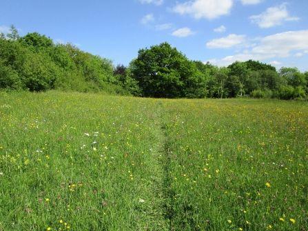A356 A stroll to Piggy Village, cafe and dog-friendly B&B, Dorset - Wildflower footpath.jpg