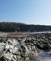 Dog-Friendly pebbled beach plus access to a coastal path. - 4.jpg
