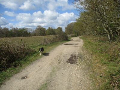 Walberswick section of the Sandlings Walk, Suffolk - Driving with Dogs