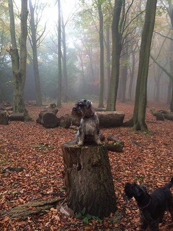 Peak District dog-friendly pub near Sheffield, Derbyshire - Dog walks and dog-friendly pubs near Sheffield.jpg