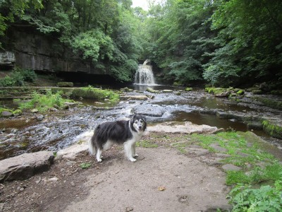 Onto the moors dog walk and dog-friendly pub, North Yorkshire - Driving with Dogs