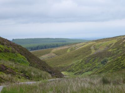 A689 Moorland dog walk for people who enjoy big spaces, County Durham - Driving with Dogs