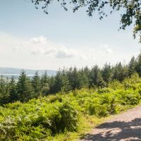 Haldon Forest Park dog walk, Devon - Haldon Forest Park Discovery Trail - Simon Stuart-Miller Photography.jpg