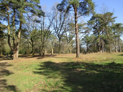 A22 and A26 dog walk in the forest, East Sussex - Driving with Dogs