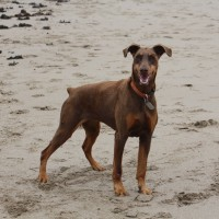 Dolwen Beach- restricted access to dogs, Wales