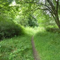 Riverside picnic site with dog swimming and walk, Northumberland - Dog walks in County Durham