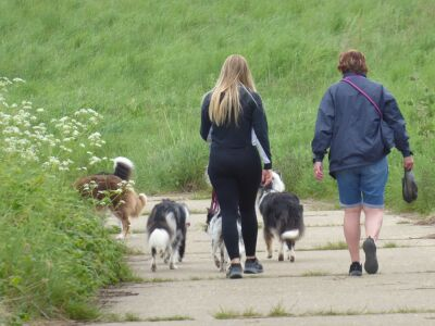Nature reserve dog walk with enormous views and marsh, Lincolnshire - Driving with Dogs