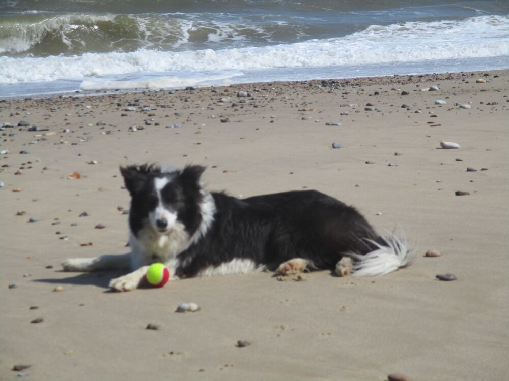 Vintage cafe and a photocall for seals, Norfolk - Dog-friendly cafe and dog walk near Caister