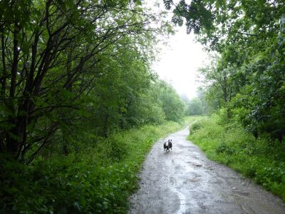 A dog walk in the woods near Coate Moor, North Yorkshire - Driving with Dogs
