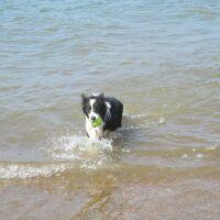 A149 Hunstanton dog-friendly B&B near the beach, Norfolk - Norfolk coast dog-friendly B&B near the beach.JPG