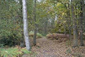 Woodland dog walk and nearby dog-friendly pub, Buckinghamshire - Driving with Dogs