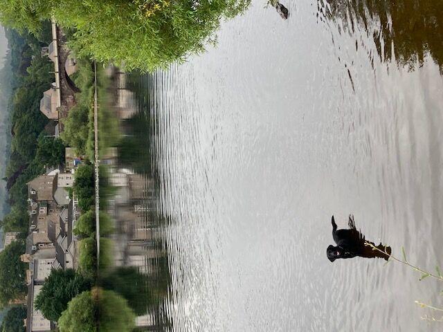 North Inch park and garden, Scotland - DDB50208-A7A2-453C-A0E2-B346FE2936E6.jpeg