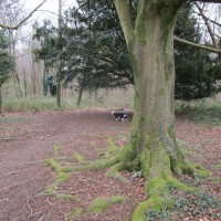 A286 country park dog walk, West Sussex - Sussex dog-friendly pub and dog walk.JPG