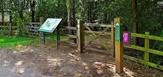 High Woods Country Park dog walks, Essex - Driving with Dogs