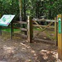 High Woods Country Park dog walks, Essex - high woods2.jpg
