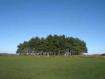 A22 iconic dog walk near Uckfield, East Sussex - Driving with Dogs
