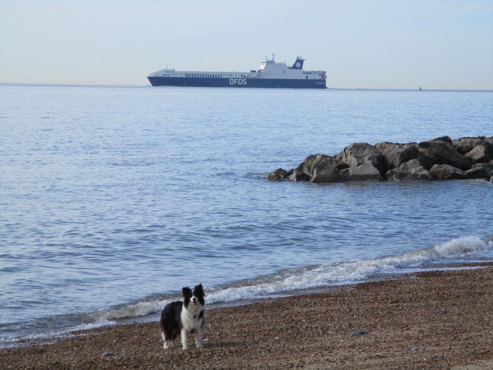 Felixstowe dog-friendly beach and cafe, Suffolk - Suffolk dog-friendly beach