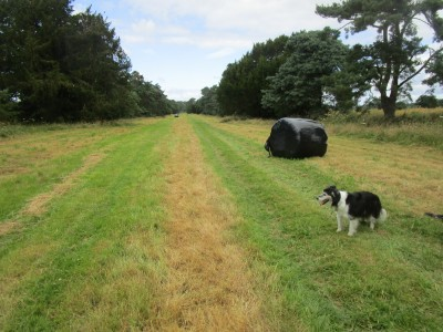 A438 dog-friendly inn and dog walk, Herefordshire - Driving with Dogs