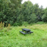 A68 Accessible old railway dog walk, County Durham - Great dog walks in County Durham