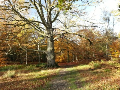 Great Wood dog walk, Hertfordshire - Driving with Dogs
