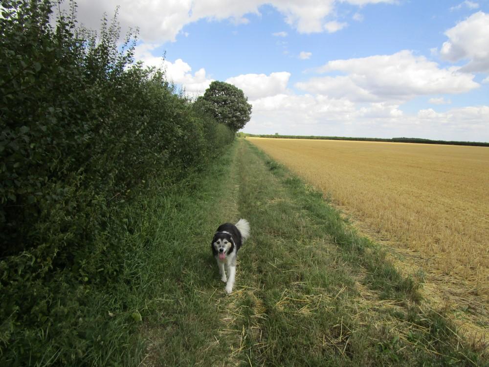 M1 Junction 15 dog walk and dog-friendly pub, Northamptonshire - Northamptonshire dog walk and dog-friendly pub