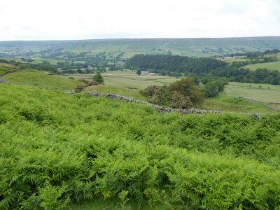 A dog walk on the moors not far from a dog-friendly inn, North Yorkshire - Driving with Dogs