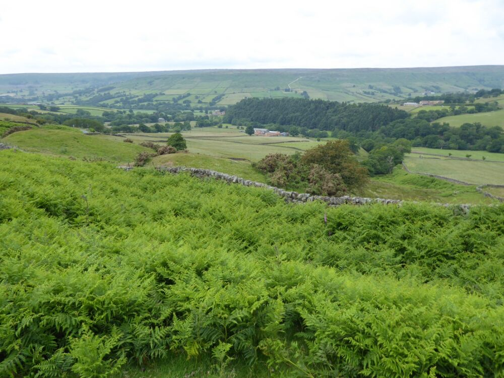 A dog walk on the moors not far from a dog-friendly inn, North Yorkshire - Yorkshire dog walks